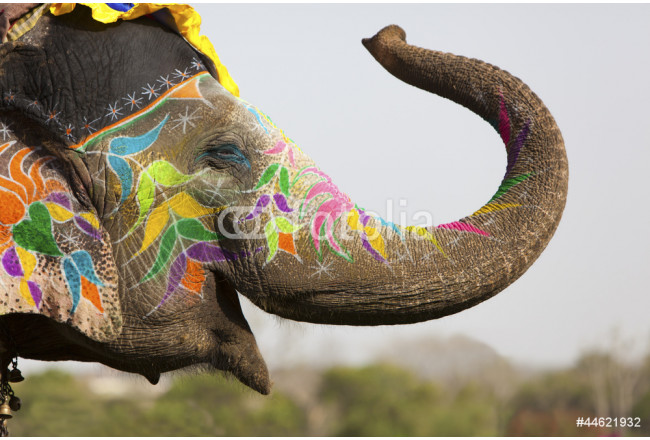Decorated elephant at the elephant festival in Jaipur 64239