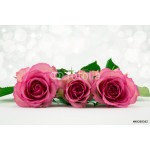 Three pink roses with diffused sparkle background. 64239