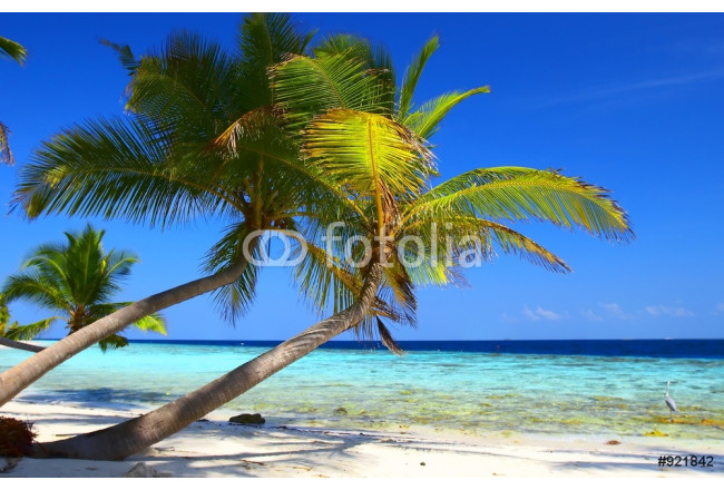 phenomenal beach with palm trees and bird 64239