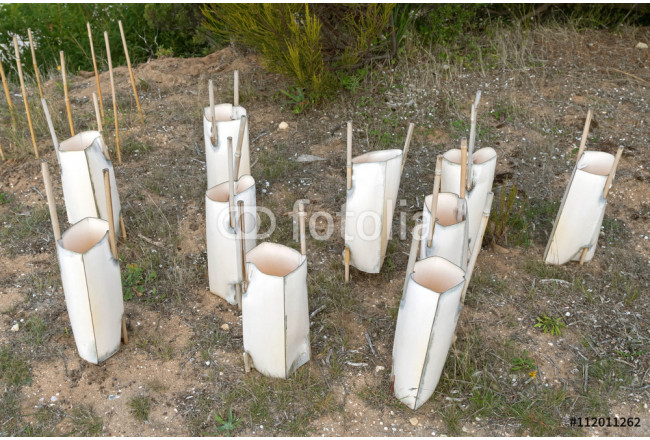 Sleeve made of wooden sticks and plastic. Simple and inexpensive way to cover and protect young tree saplings from wind desiccation and pest in Australia. 64239