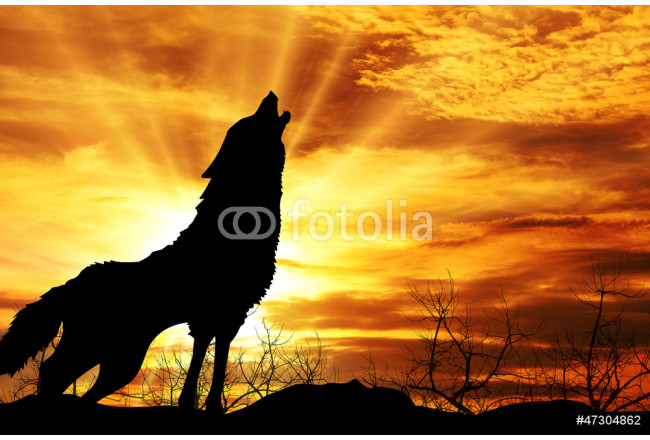 Cuadro decorativo wolf howling at the sunset 64239