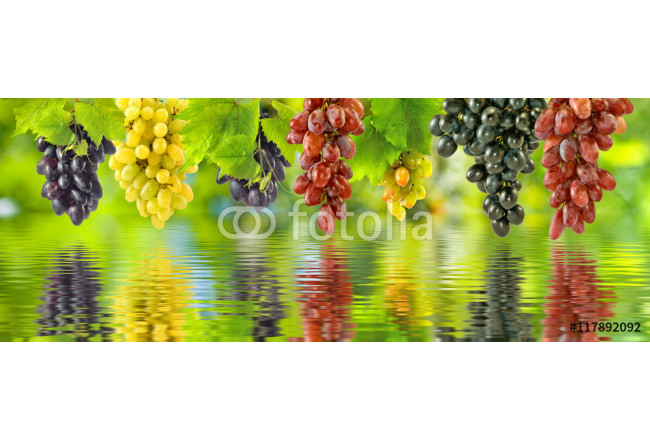 Image of grapes over the water in the garden closeup 64239