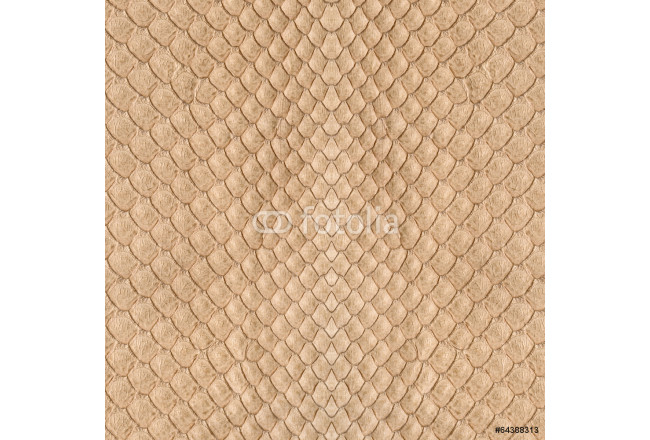 Painting background of snake skin closeup 64239
