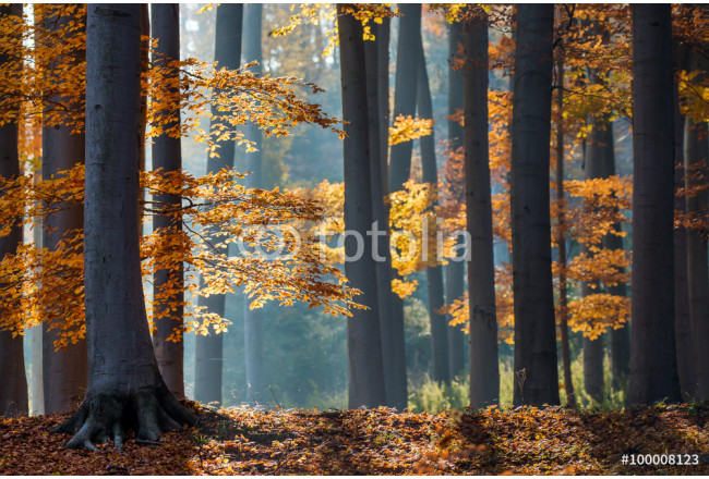 Autumn in the forest. 64239