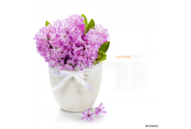 Beautiful Hyacinths 64239