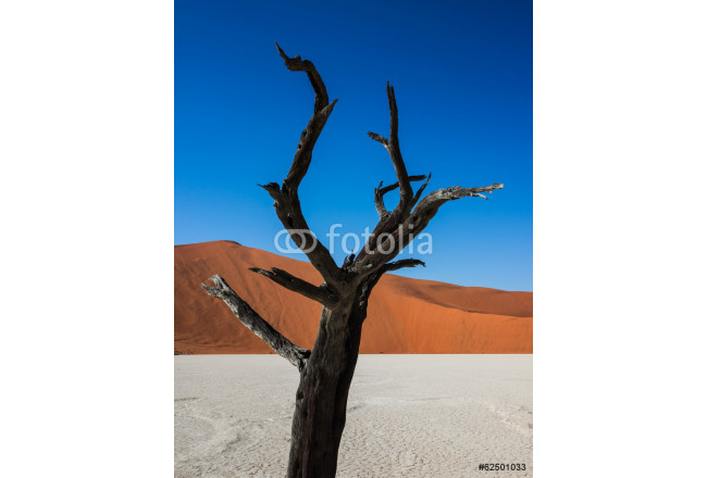 Dead Trees and Dunes in Deadvlei, Namibia 64239