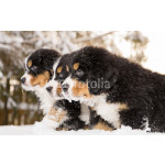 Bernese mountain dog puppets ready play game 64239