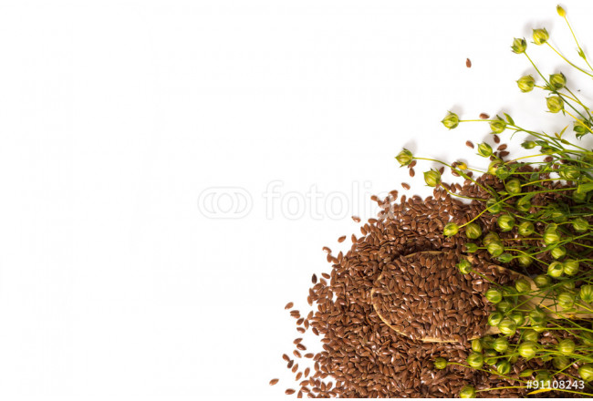 wooden spoon with linen seeds and dry linen plant capsules on white. View from above. 64239
