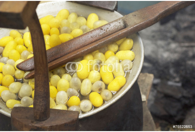 Boiling cocoon in a pot to prepare a cocoon silk. 64239