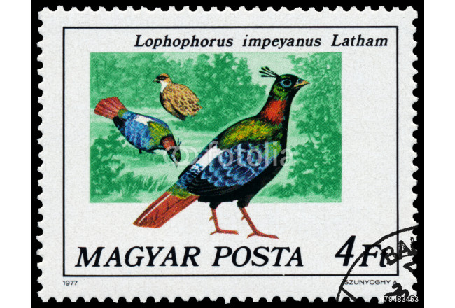 Stamp printed in Hungary shows Himalayan monal 64239