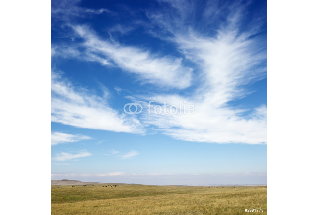 field and sky with cirrus clouds. 64239