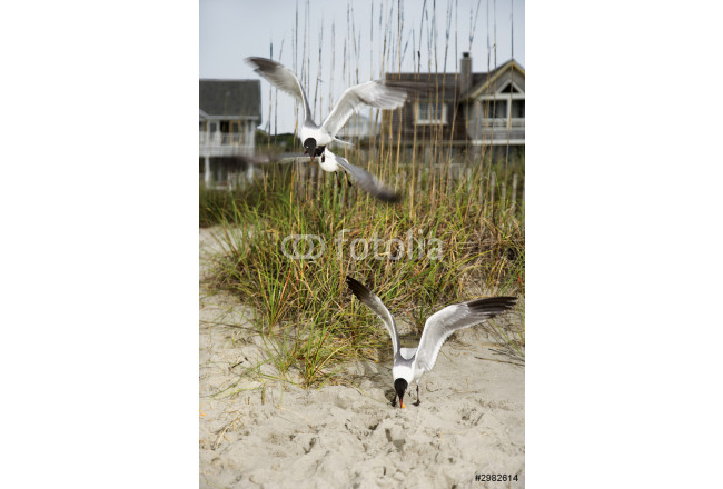 Seagulls swooping onto beach. 64239