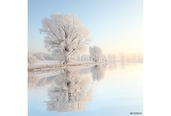 Frosty winter tree against a blue sky with reflection in water 64239
