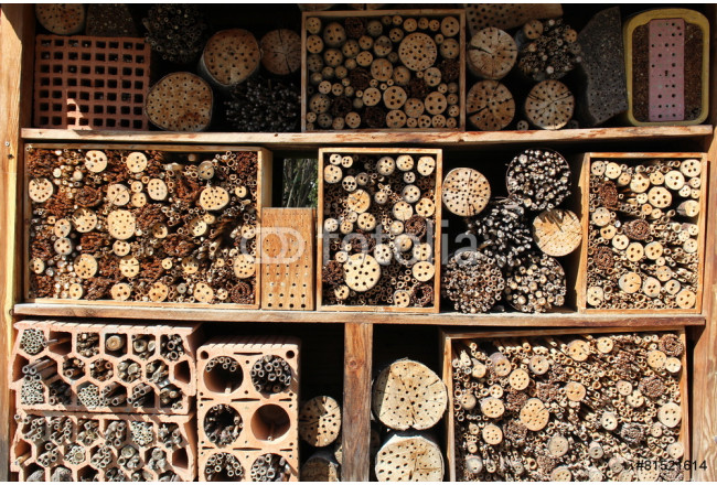 Drilled wooden pieces for insects 64239