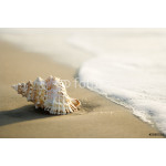 Conch shell on beach  with waves. 64239