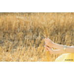 girl's hands holding wheat ears bouquet 64239