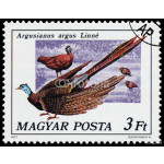 Stamp printed in Hungary shows Great argus 64239