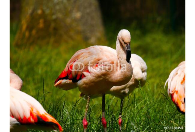 Toile imprimée Flamants roses - découvrez des décorations d ... 7ff8edde9167