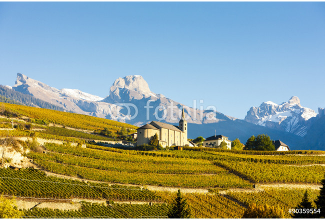 vineyards below church at Conthey, Sion region, canton Valais, S 64239