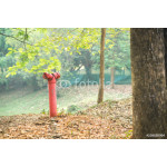 Red fire hydrant 64239