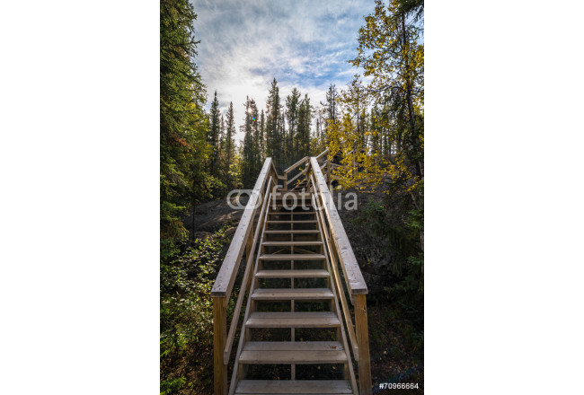 Canadian Forest Trail 2 64239