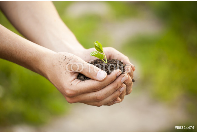 Hands holding seedleng 64239