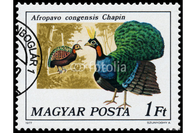 Stamp printed in Hungary shows Congo peafowl 64239