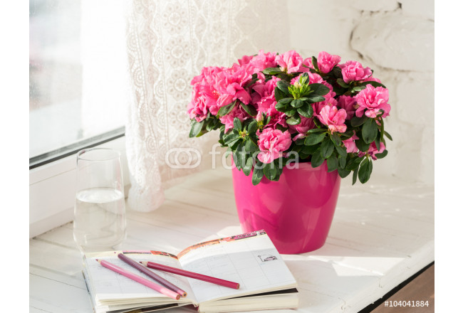 Obraz nowoczesny blooming pink azalea in pink flowerpot notebook, pencils, glass of water white rustic background 64239