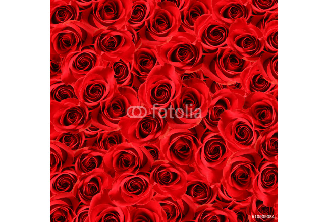 Over view of large beautiful red roses 64239