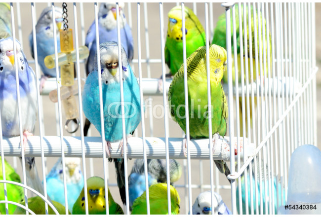 parrot in a cage 64239