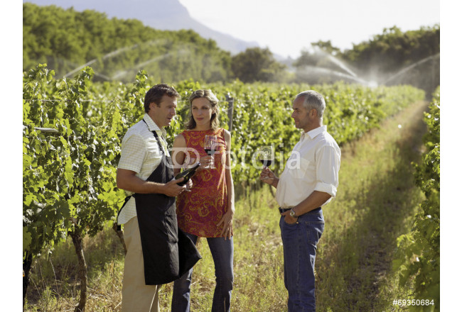 People drinking wine at a vineyard. 64239