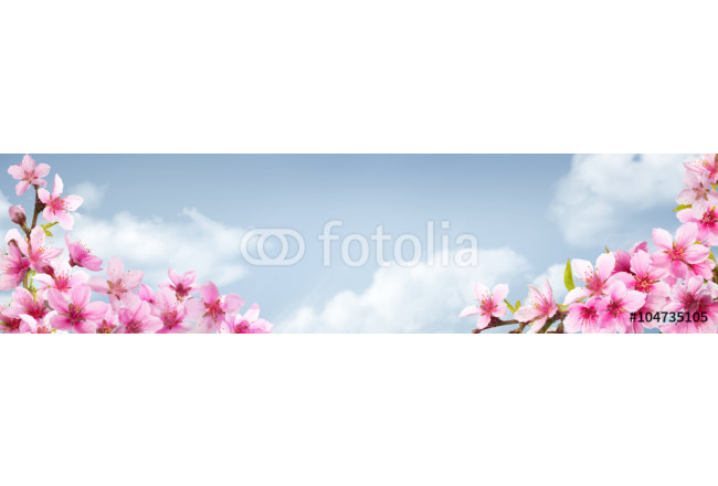 Spring background with pink blossom 64239