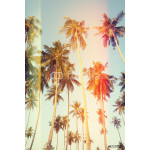 Palm trees at tropical coast, vintage toned and film stylized 64239