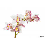 Beautiful Flower Orchid close up isolated on white background 64239