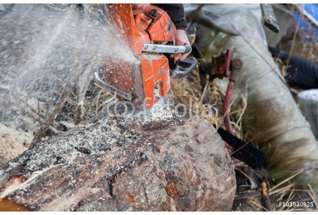 Close-up of male hands cutting trunk with chainsaw and many tree trunks in the background 64239