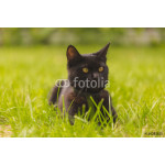 Beautiful black cat with green eyes lying on the grass in the garden 64239