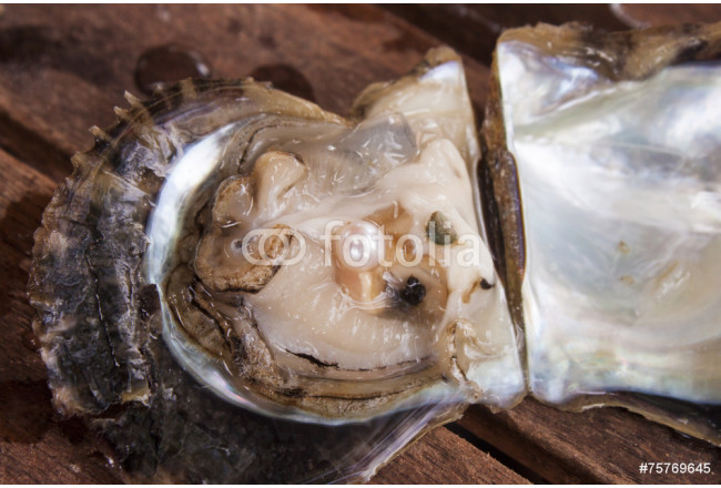 Pearl inside a oyster 64239