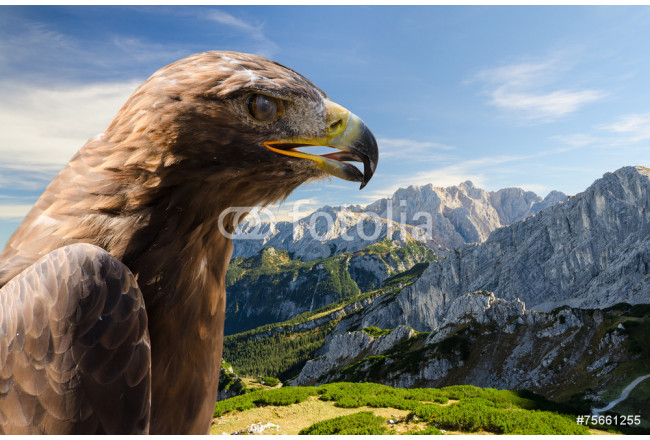 Aerial view of Alps mountains landscape with golden eagle 64239