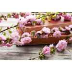 Spring flowering branch with old books on grey wooden background 64239