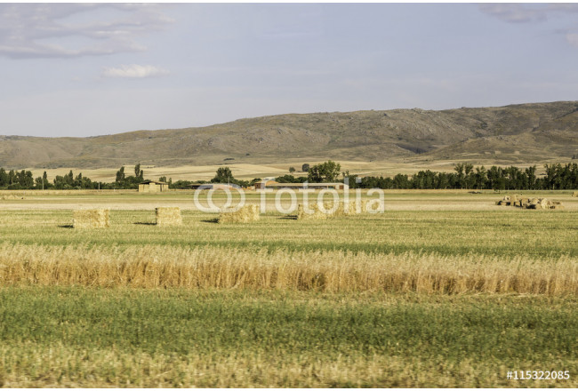 Obraz nowoczesny view of a landscape of fields cultivated captured from a car