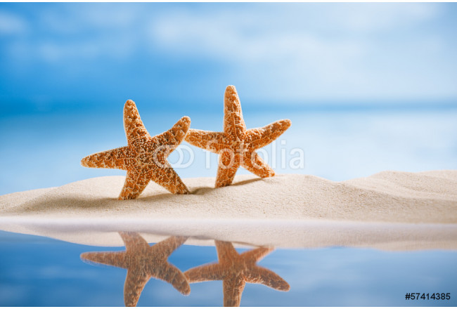 starfish  with ocean , beach, seascape and reflection 64239
