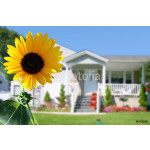 bright sunflower in front of a country house 64239