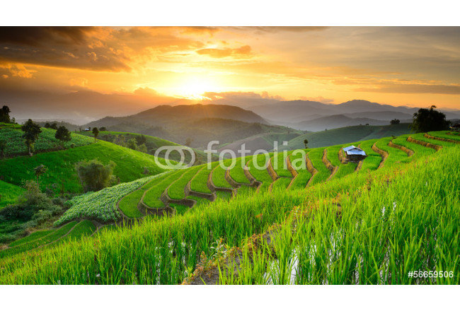 Rice Terraces with sunset backdrop at Ban Papongpieng Chiangmai 64239