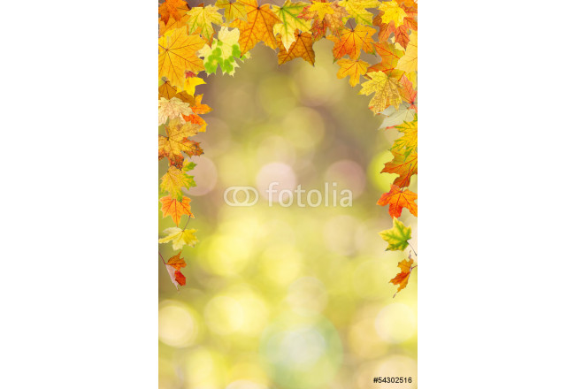 Painting Maple autumn foliage, on natural background. 64239