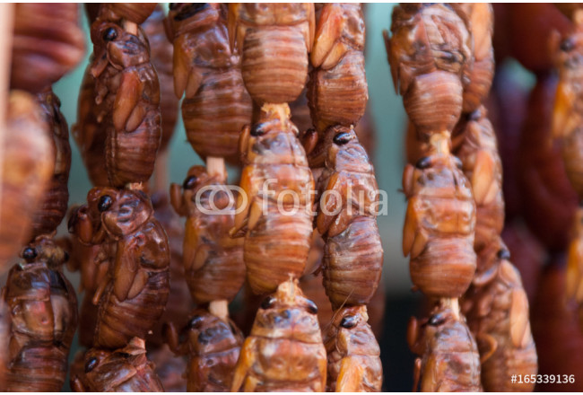 China Beijing, traditional insect food on skewer 64239