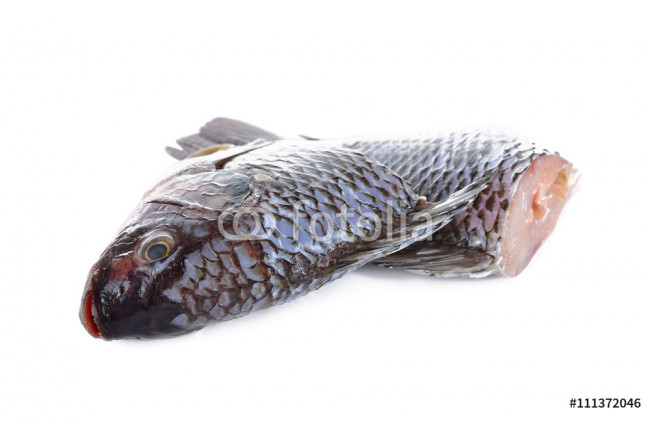 Gutted and scaled Nile Tilapia fish on white background 64239