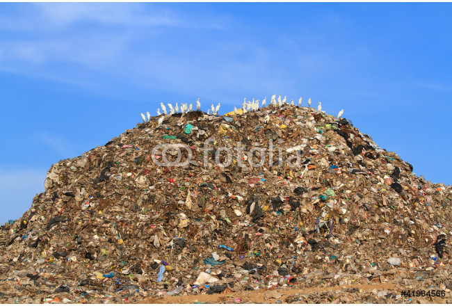 Bird on mountain of garbage 64239