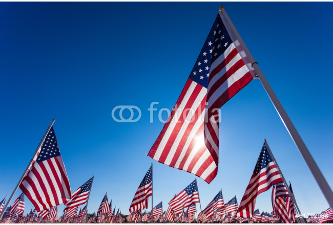 A display of American flags with a sky background 64239