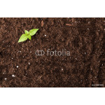 Seedling green plant surface top view textured background 64239