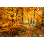 Majestic landscape with autumn leaves in forest. 64239